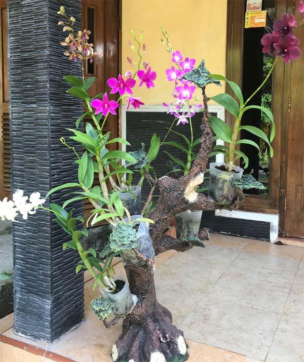 Tips Merawat Anggrek Perhatikan Faktor Lingkungan Aaorchid Kebun Bunga Anggrek Rkebun Anggrek Di Rumah
